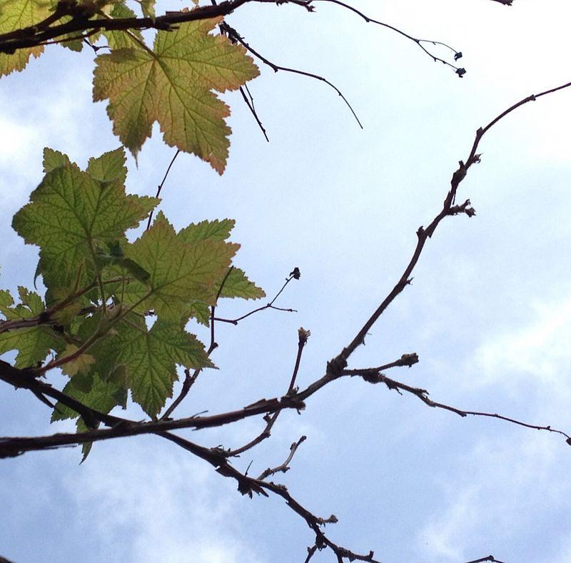Leaf Twig Sky